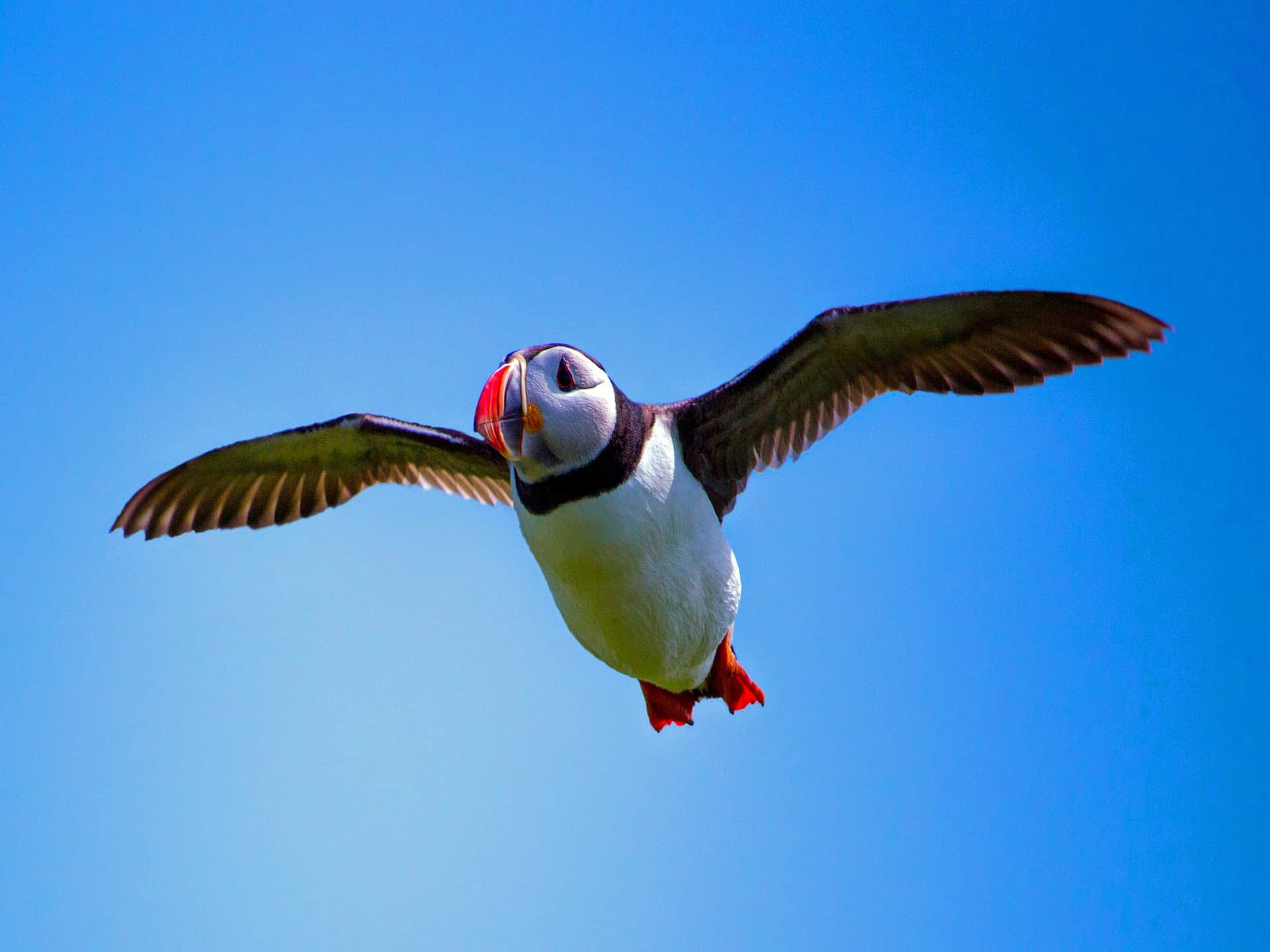 Take a boat trip to the Farne Islands, perfect for nature lovers at Riverside