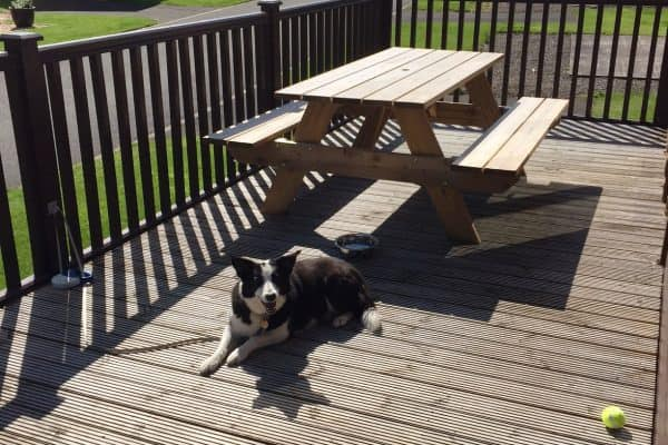 Allow your pet to relax in comfort on the decking of our doggy lodge at Thurston Manor