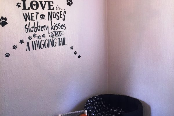 A bedroom just for your dog at Thurston Manor doggy lodge